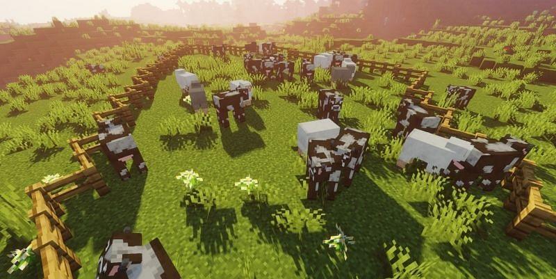 Livestock in minecraft